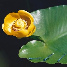 pond content shapes
