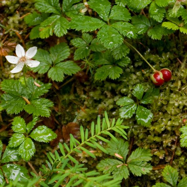 woodland texture