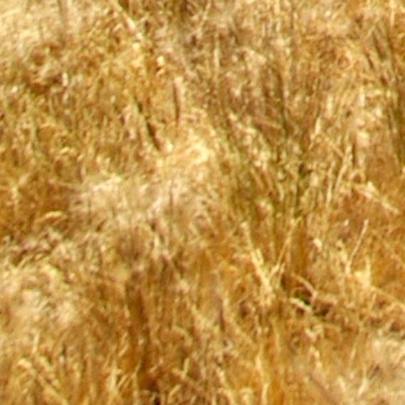 eastern grass texture