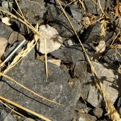rocks grass texture