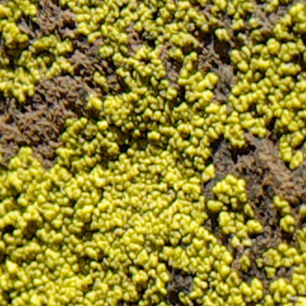yellow rock growth texture