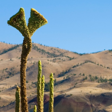 desert-plant-shape