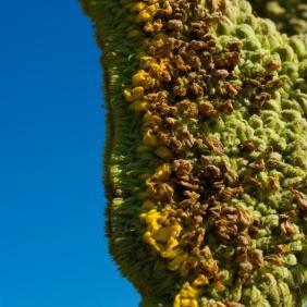 desert-plant-texture