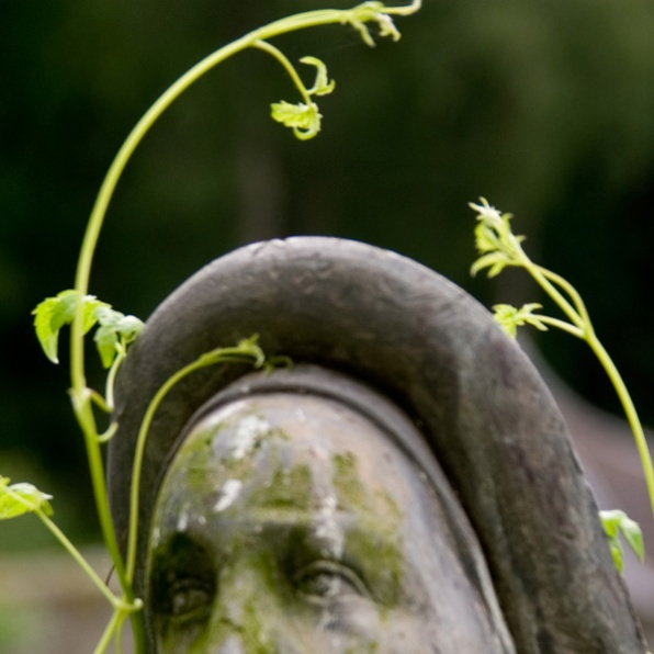 hat-and-plants-shape