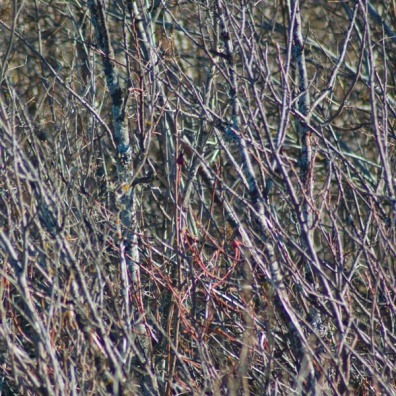 nature-reserve-twigs-texture