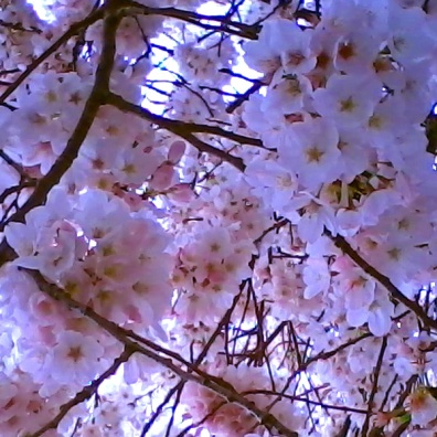 pink-tree-texture