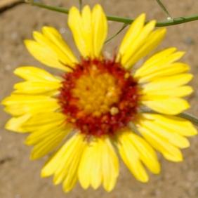 yellow-flower-shape