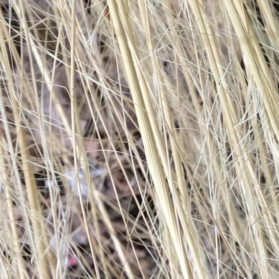 fine-grass-texture