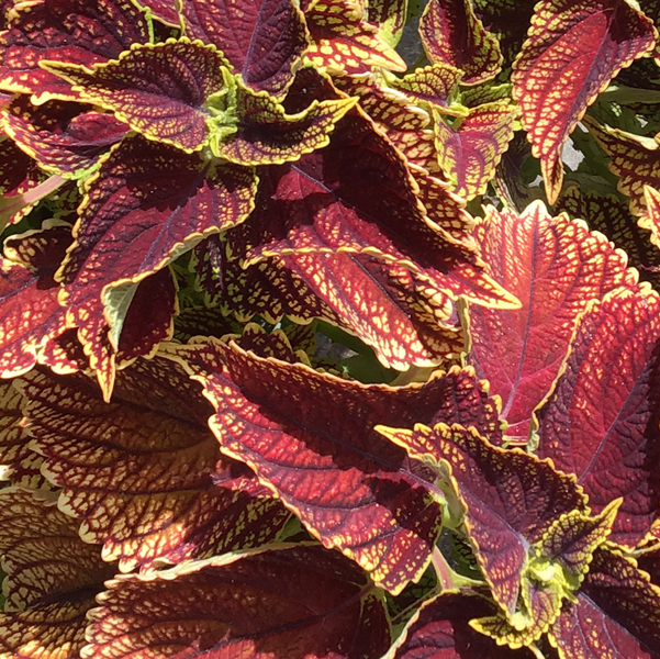 red and green plant texture